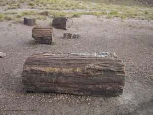 Foresta Pietrificata (Arizona)