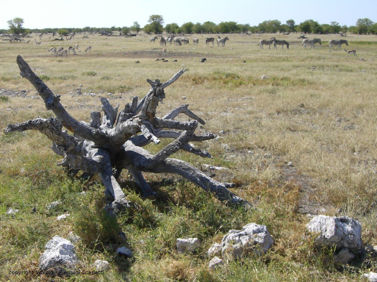 Animali della Namibia