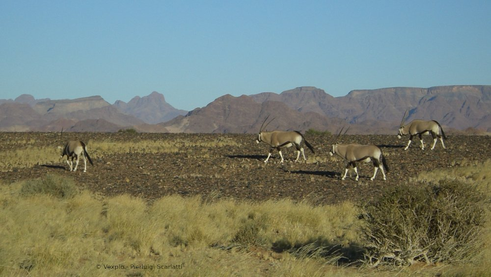 Orici delle Namibia