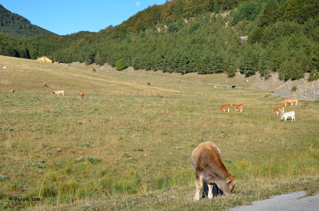 Parco del Pollino - Animali al pascolo davanti al rifugio De Gasperi