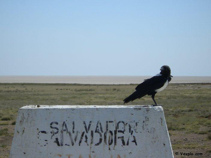 Corvo su capitelli in Namibia.